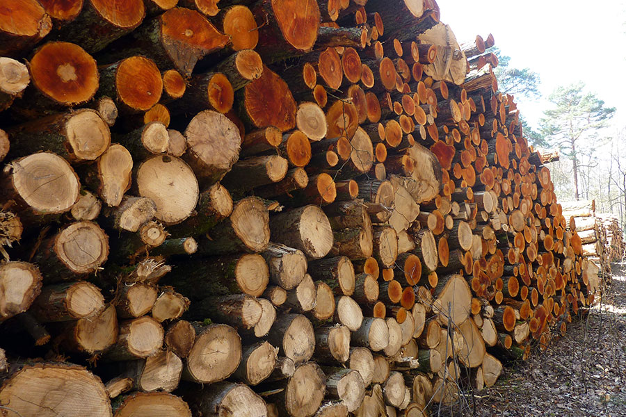 Holzhandel Umwelt engineering