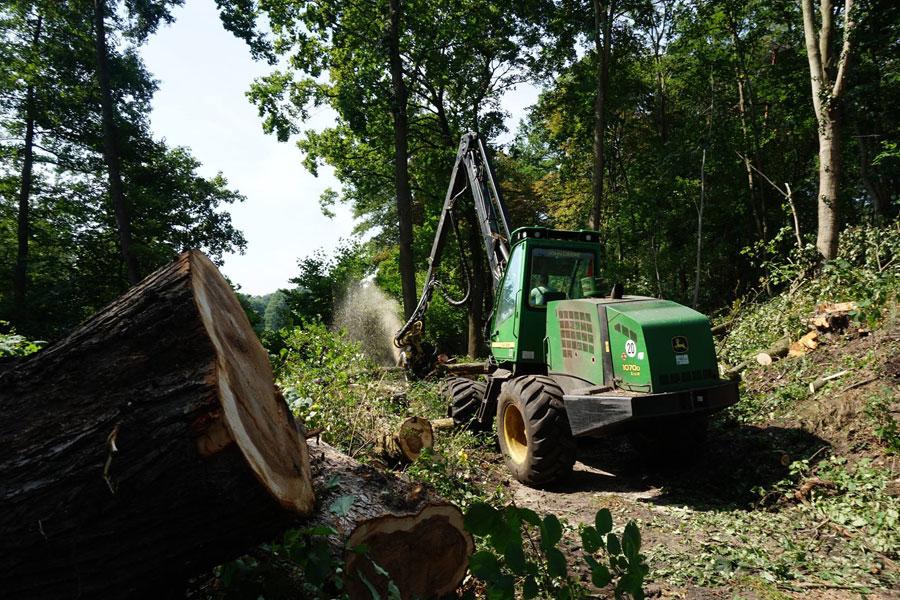 Holzeinschlag & Holzrueckung