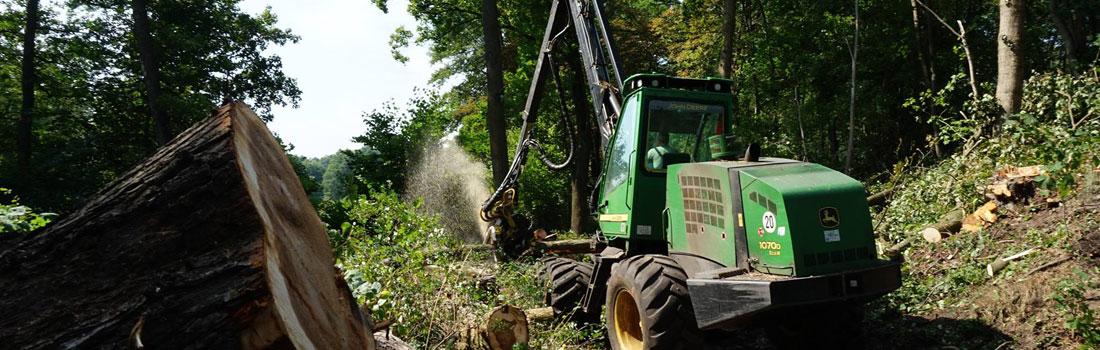 Holzeinschlag & Holzrückung